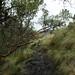 Polylepis forest / Лес полилеписов