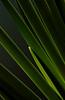 Iris reeds in early light (blinkingidiot) Tags: morning iris light abstract flower early universityofnottingham nottinghamuniversity highfieldpark musictomyeyeslevel1 flickrstruereflection1