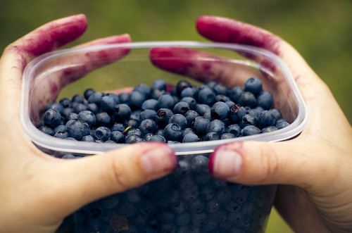 Mustikal / Blueberry picking