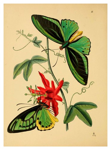 004a-The cabinet of oriental entomology…1848- John Obadiah Westwood
