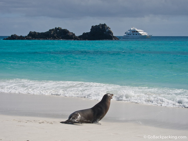 Sea Lion on Espanola Island, Galapagos