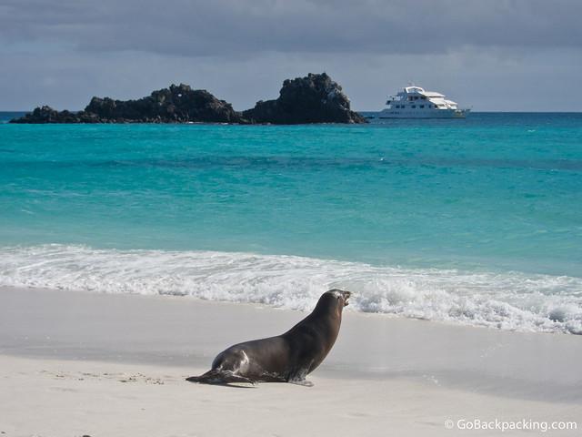 Sea Lion on Espanola Island, Galapagos