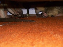 Pua and Aurora under the bed