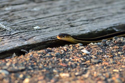 Snake in a Crack DSC_9211