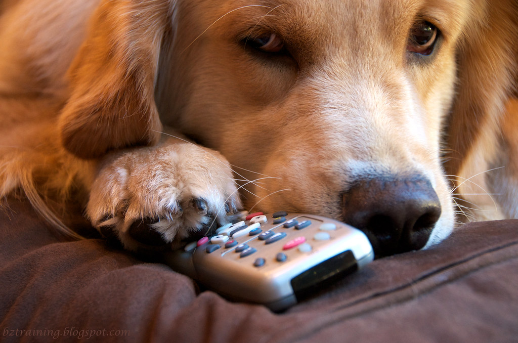 Paws off MY Switcher