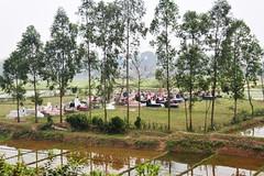 113_LAO90440024 (TC Yuen) Tags: vietnam sapa hmong terracefarming locai