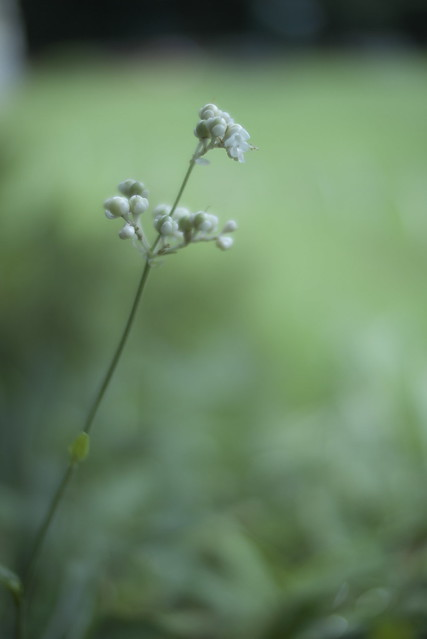 Faint Green