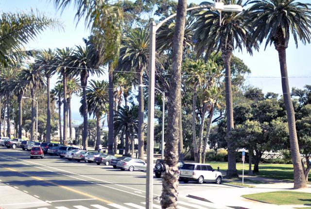 view of ocean avenue in Santa Monica + Palm Trees