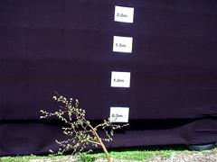 G.16 Tree