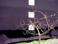 P.2 Tree