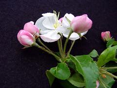 V.3 Flower Cluster