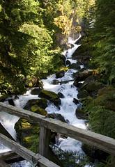 Pacific Northwest Trail - the PNT bridge over Hidden Creek above its confluence with the Baker River (Matt McGrath Photography) Tags: bridge washington trail northcascades hiddencreek bakerriver bakerlake mtbakerrangerdistrict mtbakersnoqualmienationalforest pacificnorthwestnationalscenictrail