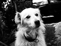 Meda (DjordjeR) Tags: blackandwhite bw dog white black dogs animals photography countryside serbia perro hund pas lightroom lightroom3