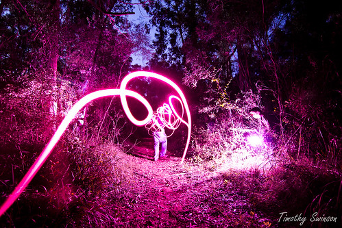 Light Trails Forest 1