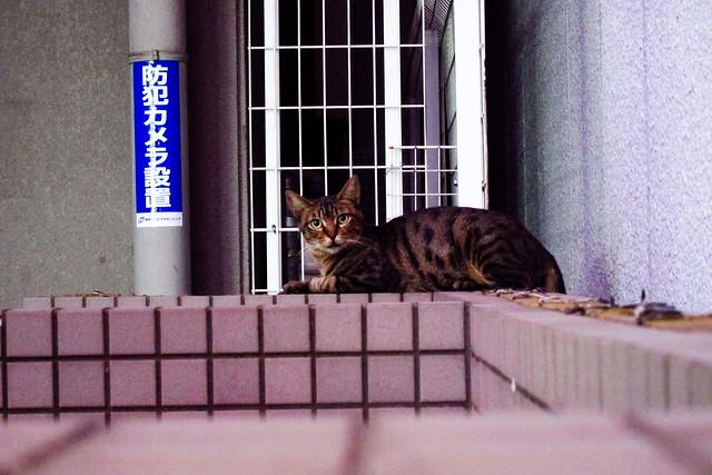 Today's Cat@2011-09-15