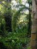 DSC02712 (rantavani) Tags: plantas tropicais
