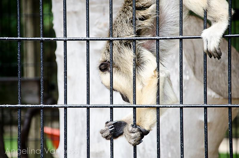 Cape May Zoo13-Edit