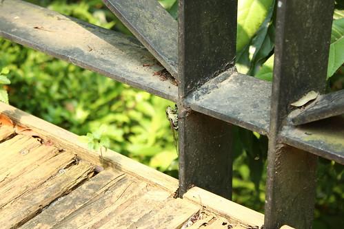 Steel and Cicada