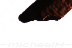 ~ Great Australian Bite ~ (~wishiwasanotter~) Tags: abstract bite yumyum nibblenibble nomnom odc2 wishiwasanotter wishihadmoretoshare
