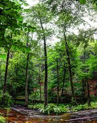 Forsakar (MikeAncient) Tags: panorama nature water forest landscape geotagged skne stream sweden rapids naturereserve ravine sverige hdr maisema luontokuva mets ravin luonto naturephotography maisemakuva ruotsi panoraama forsakar tonemapped tonemap 3exp rotkolaakso luonnonvalokuvaus