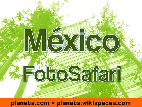 mexico city fotosafari and treasure hunt