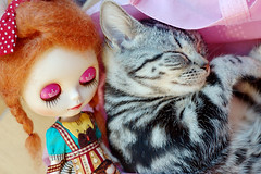 Blythe with cat