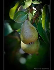 Wild Pears (JSB PHOTOGRAPHS) Tags: camera wild nikon pears d2x nikkor 18200mm