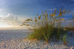 Sea Oats at Sunrise (Nwbama) Tags: ocean light beach clouds sunrise sand florida footprints atlantic staugustine seaoats magicunicornverybest magicunicornmasterpiece nwbama masterclasselite steveminor