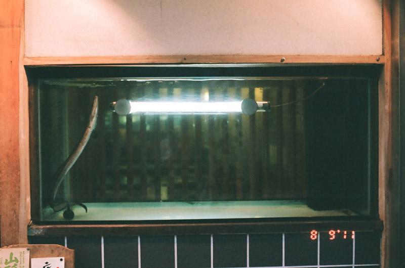 eel (1 of 11)