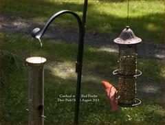 cardinal birdfeeder deerparkmd roncogswell cardinalatthebirdfeeder cardinalatthebirdfeederdeerparkmd