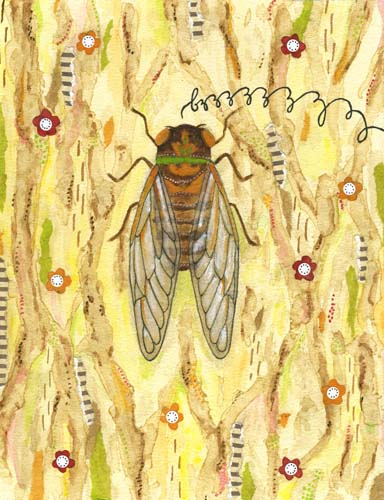 cicada flickr