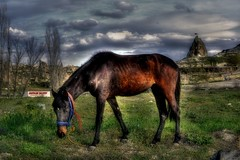 The Horse ...Cappadocia ..Greme /Turkey (painter&draftsman) Tags: horse turkey trkiye cappadocia greme nevehir saariysqualitypictures