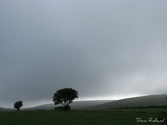 Merveilleux Aubrac (Domi Rolland ) Tags: france nature canon europe été roussillon arbre brouillard languedoc brume aubrac g9