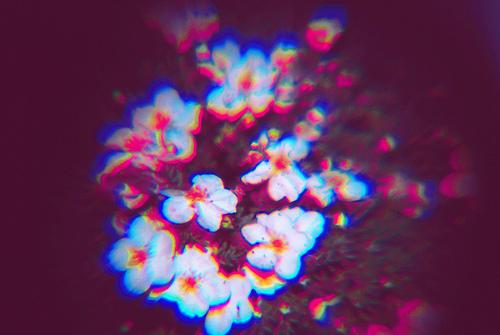 tumblr_lijczgbqYA1qfy5yro1_500