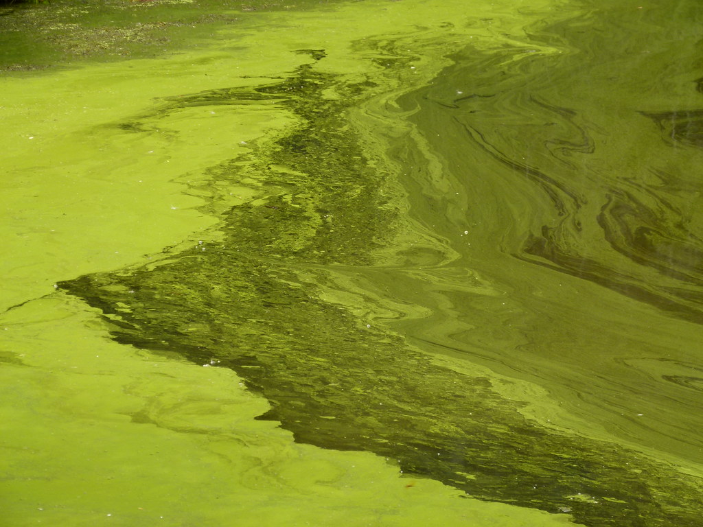 The world 39 s best photos of algae and pennsylvania flickr for Green pond water