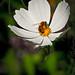Buzzing Bee-7275