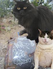 meow. (Lincoln Stinkley) Tags: graffiti sale bake osker