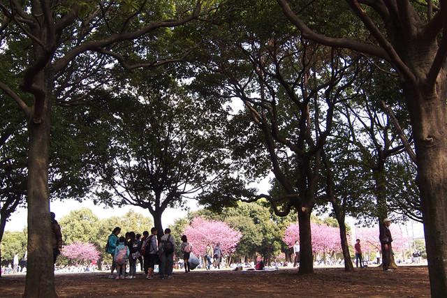 110410_140218_岸根公園