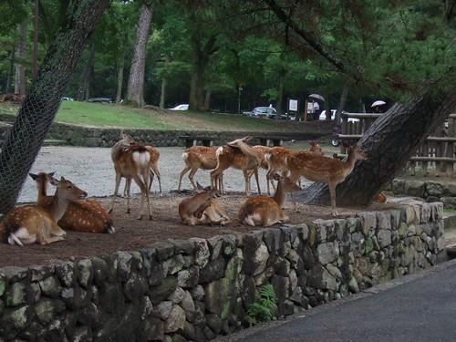 1111 - 21.07.2007 - Nara