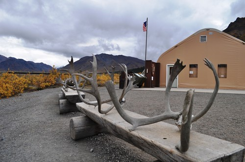 Antlers Outside Toklat River Visitor Center, Denali National Park, Aug. 31, 2011