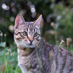 Le chat (Tets07) Tags: france nature cat chat pentax animaux ardche