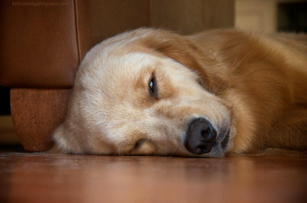 Sleepy Sunday
