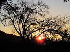 Colándose entre ramas (Francisco Martínez Catalán) Tags: chile sunset sun tree sol canon atardecer árbol maríapinto