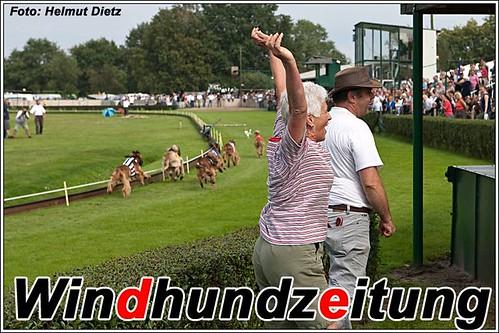 FCI-European-Championship-2011-Beringen-Belgium-Afghan-Hound-Final