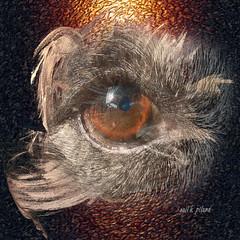 "Eye Wing....Explored (gailpiland) Tags: dog eye digital sensational fractal phototexture awardtree ""flickraward"" gailpiland ringexcellence"