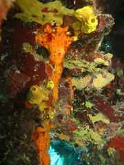 coral colours (terry.1953) Tags: sea coral niceshot colours underwater scuba diving scubadiving bvi colorphotoaward mygearandme
