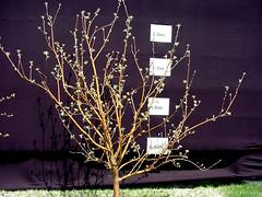 M.7 EMLA Tree