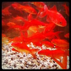 Mo fish