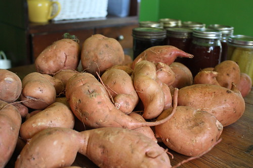 6132786993 1783dcaab2 Shopping Superstars: 20 Pounds of Sweet Potatoes