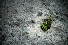 life (j / f / photos) Tags: life deleteme5 deleteme8 plant fern deleteme deleteme2 deleteme3 deleteme4 green deleteme6 deleteme9 deleteme7 rock deleteme10
